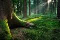 Quel momento nel bosco