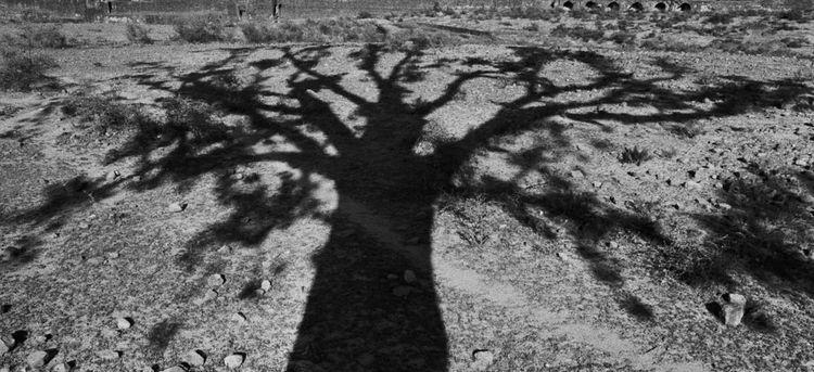 Le ombre lunghe del ritorno a casa