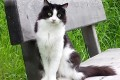 Il gatto con la panchina