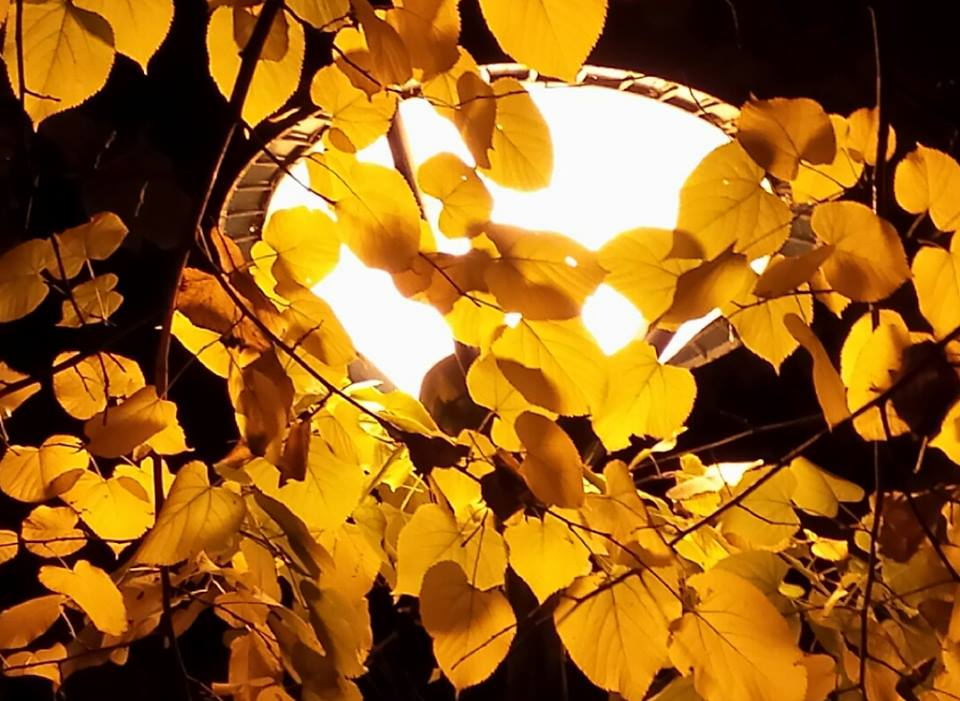 Una luce velata